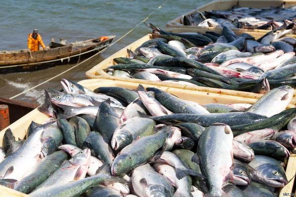 Pakistans fish exports